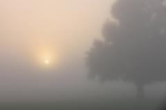 Teeter Sunrise Fog with tree
